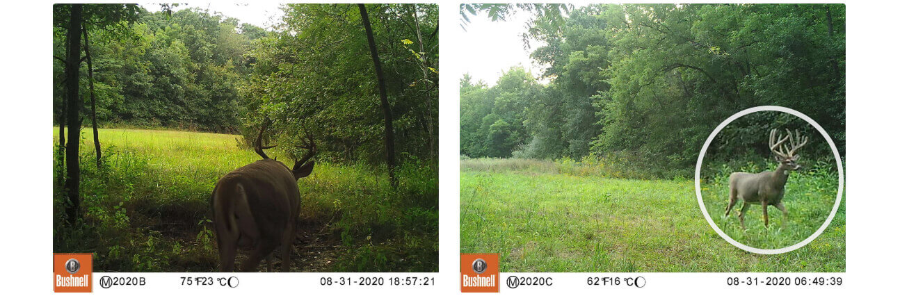 Trail camera photos and zoom feature for tagging animals.
