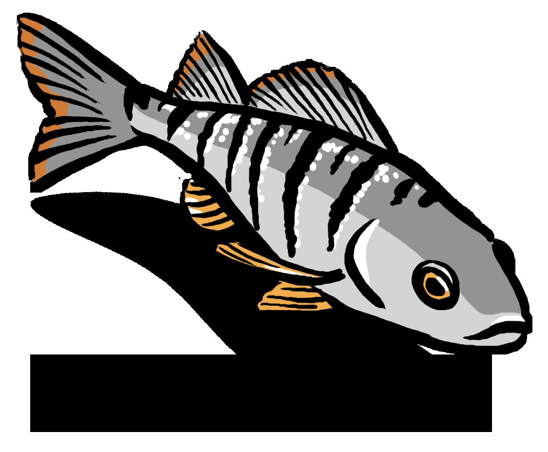 Fisch_Wasser