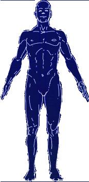 Human male archetype normal-spectrum representation.