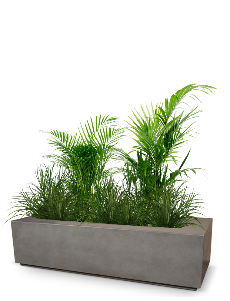 A planter box with plant species growing, representing much growth