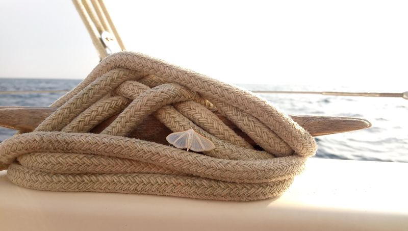 Tightened rope on a cleat