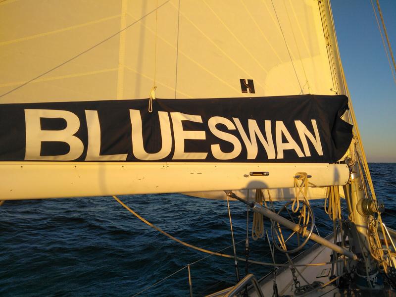 Blue swan sailing on the mediterranean sea