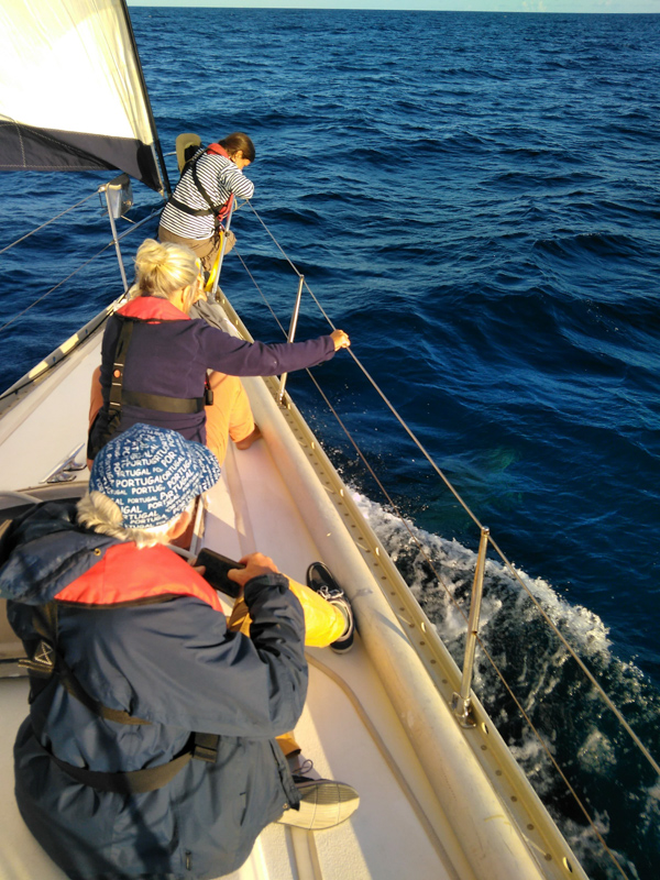 Crew members seeing dolphins