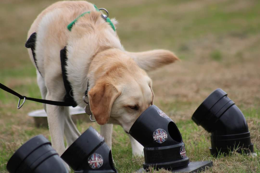 Scentwork training photo- pipes