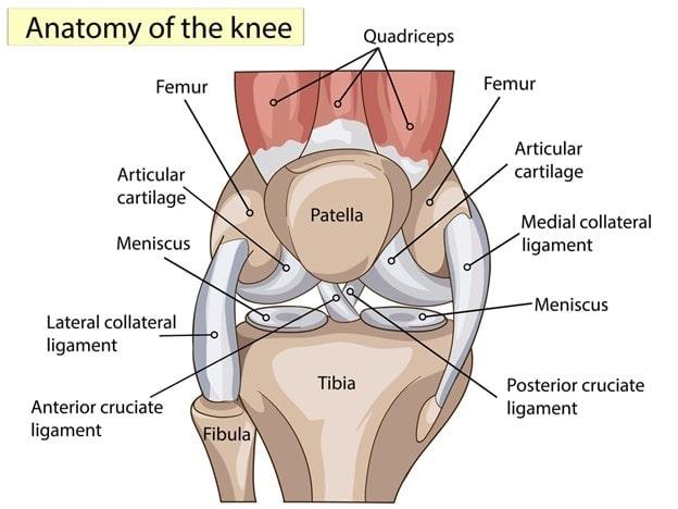 Atlanta Knee Anatomy