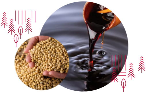 Two circular images, one is a close up of Shoyu, another is a close up of mature dry soybeans.
