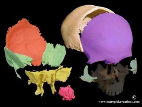 Cranial motion colored bones 21 sec movie - YouTube