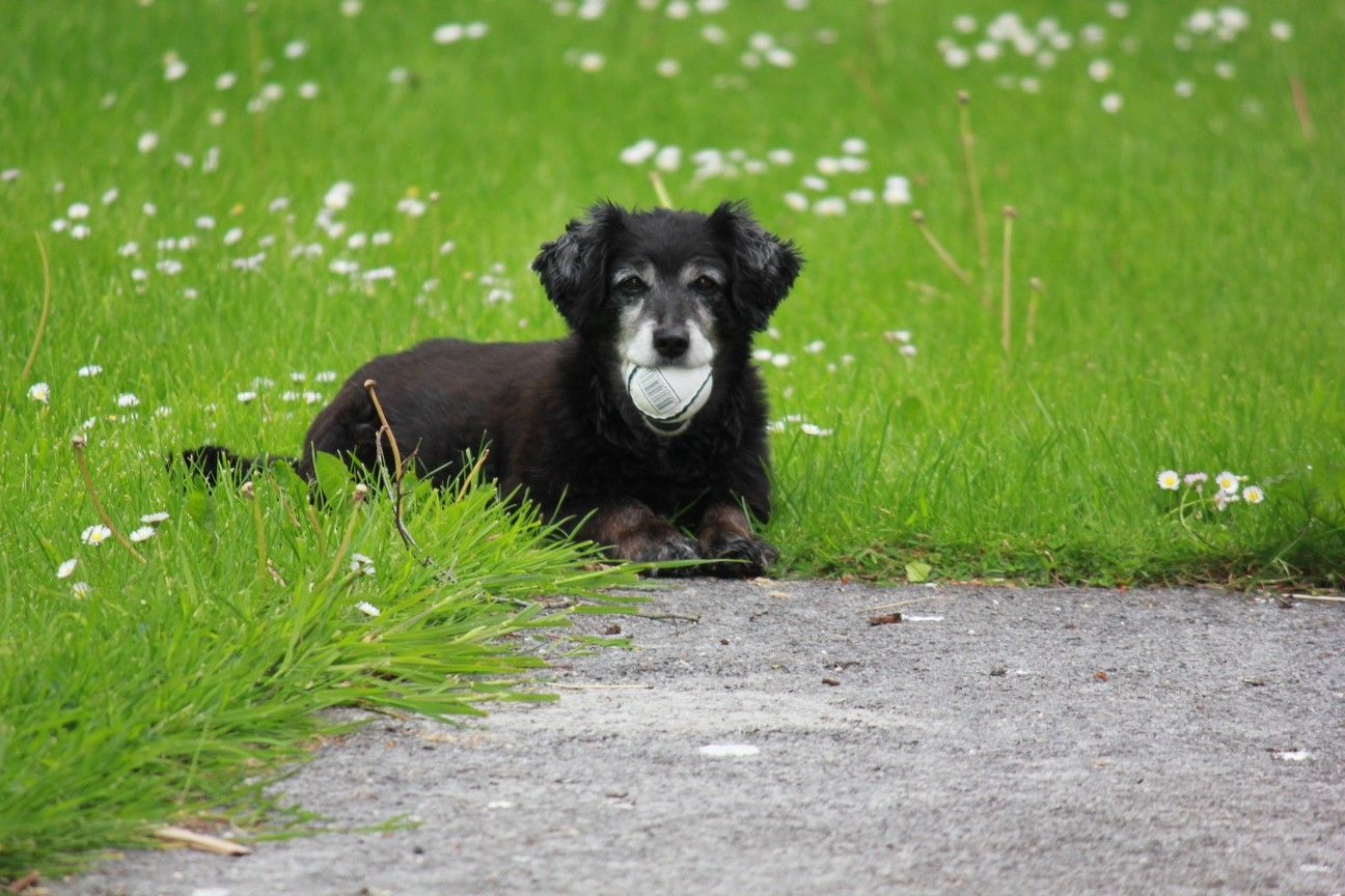 Adare Camping & Caravan Park - Dog with Sliotar