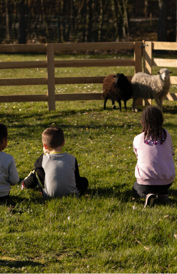 kids looking at sheeps