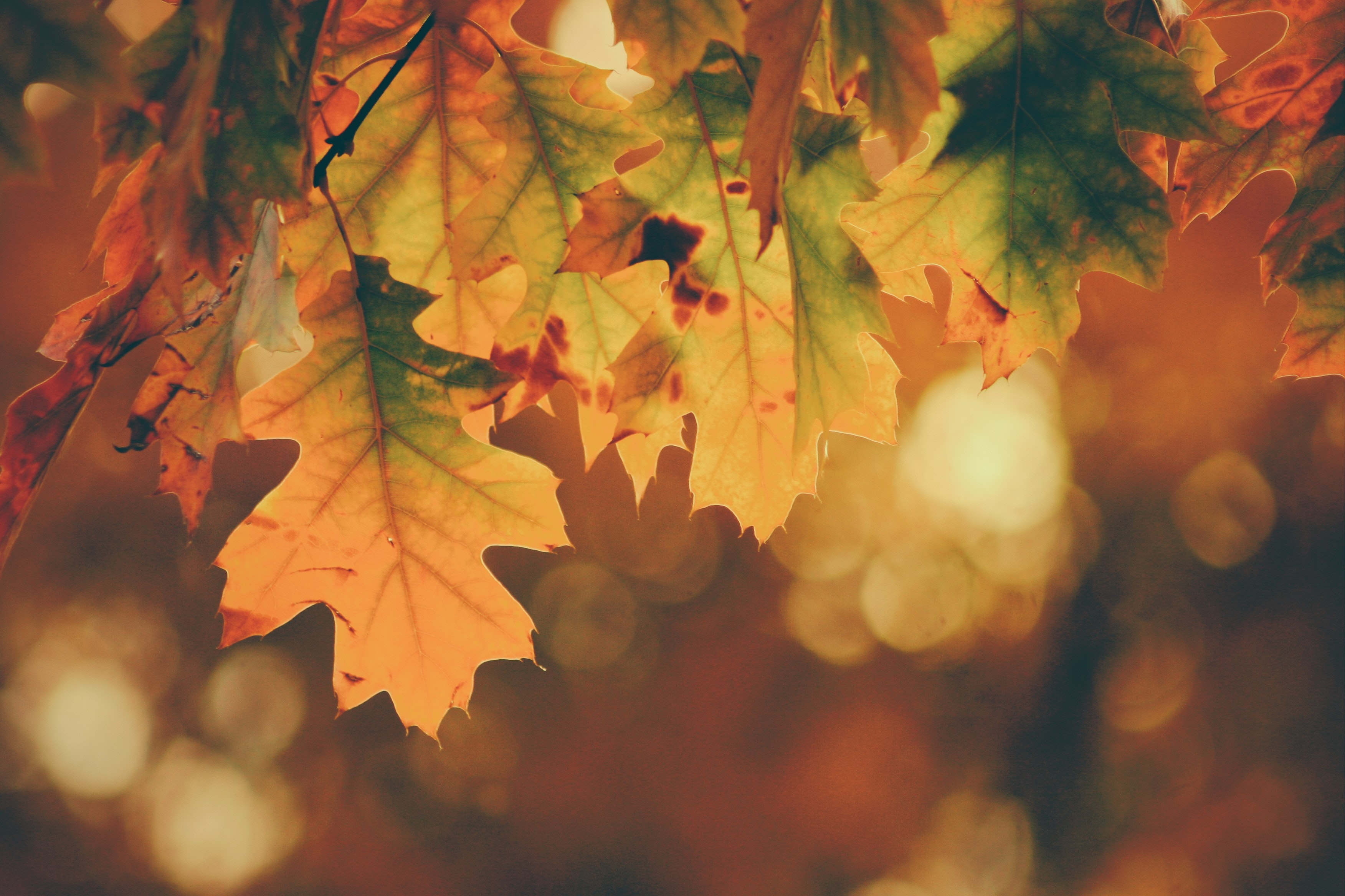 Close up of fall leaves that orange, red, and brown