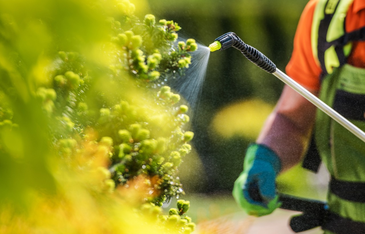 Vegetation control using insecticide