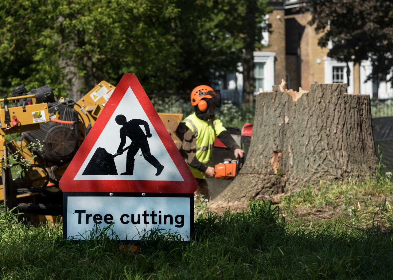 An arborist using a chainsaw to remove a tree stump from the property