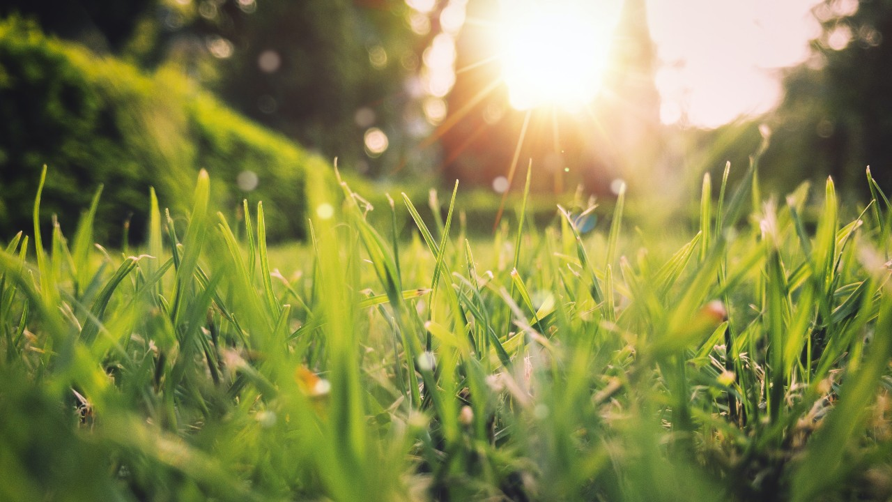 Spring lawn with fresh green grass