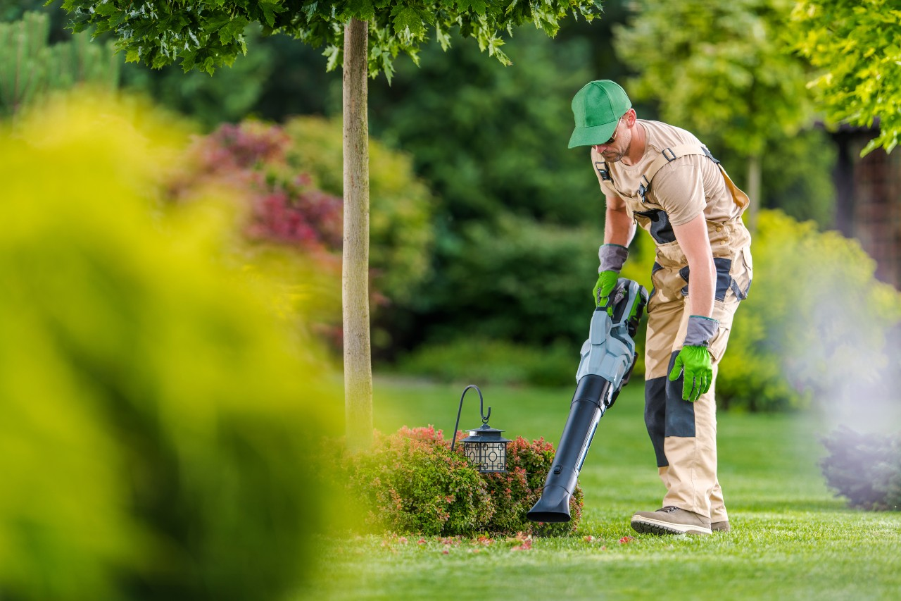 Professional blowing out hedges and bed to promote new growth