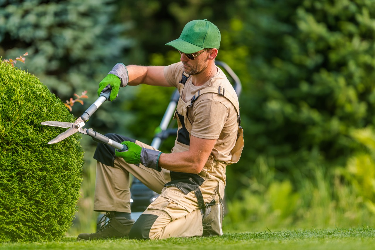 Professional trimming a hedge with pruning equipment