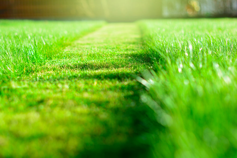 Freshly cut grass for a perfect lawn.