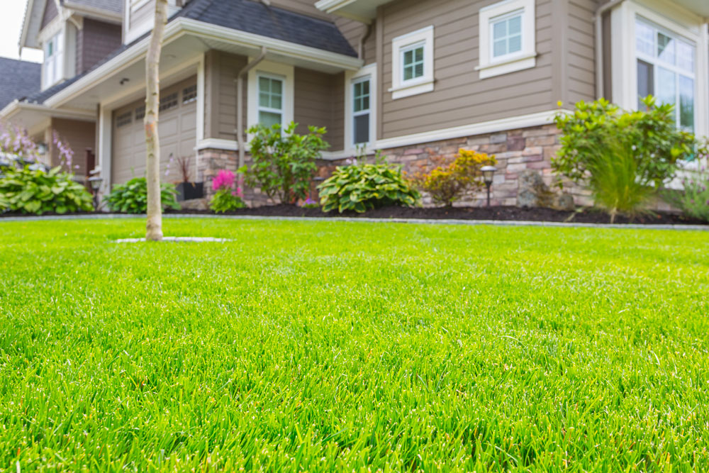 A beautiful residential lawn.
