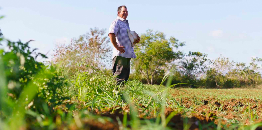 nestle supporting regenerative agriculture photo of man standing in field