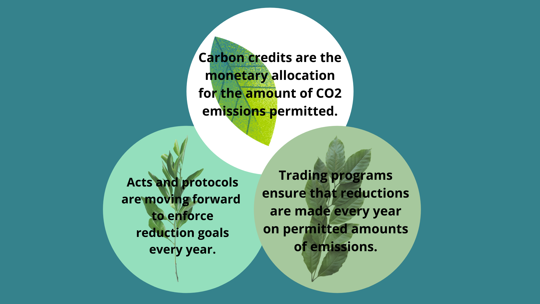 Everything You Need to Know About Carbon Credits