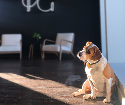 A round hound dog mix sits in the light from the window at the Helen & Gertrude office. The neon H&G sign can be seen in the background.
