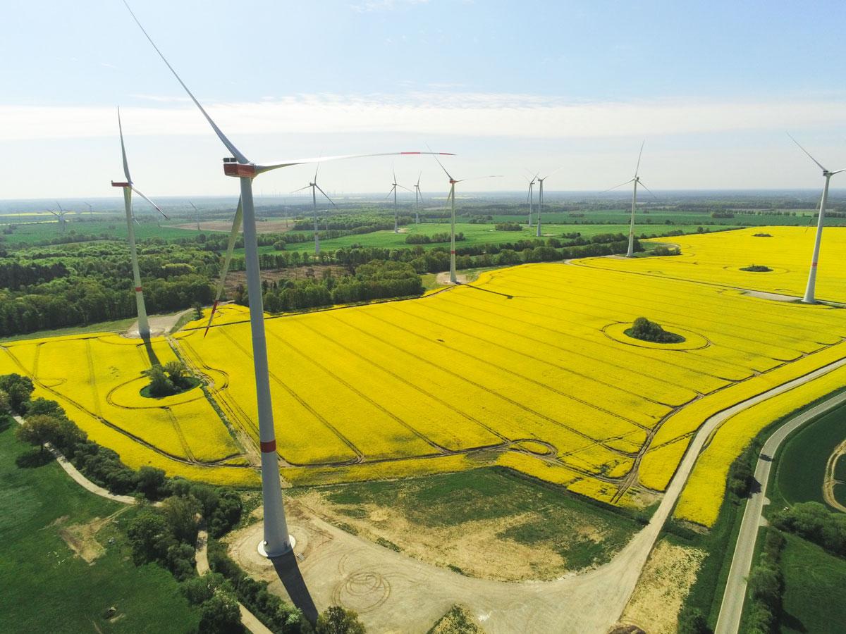Windpark Krampfer gelbes Rapsfeld