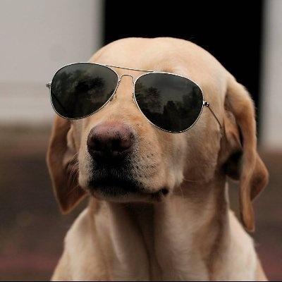 The Crypto Dog