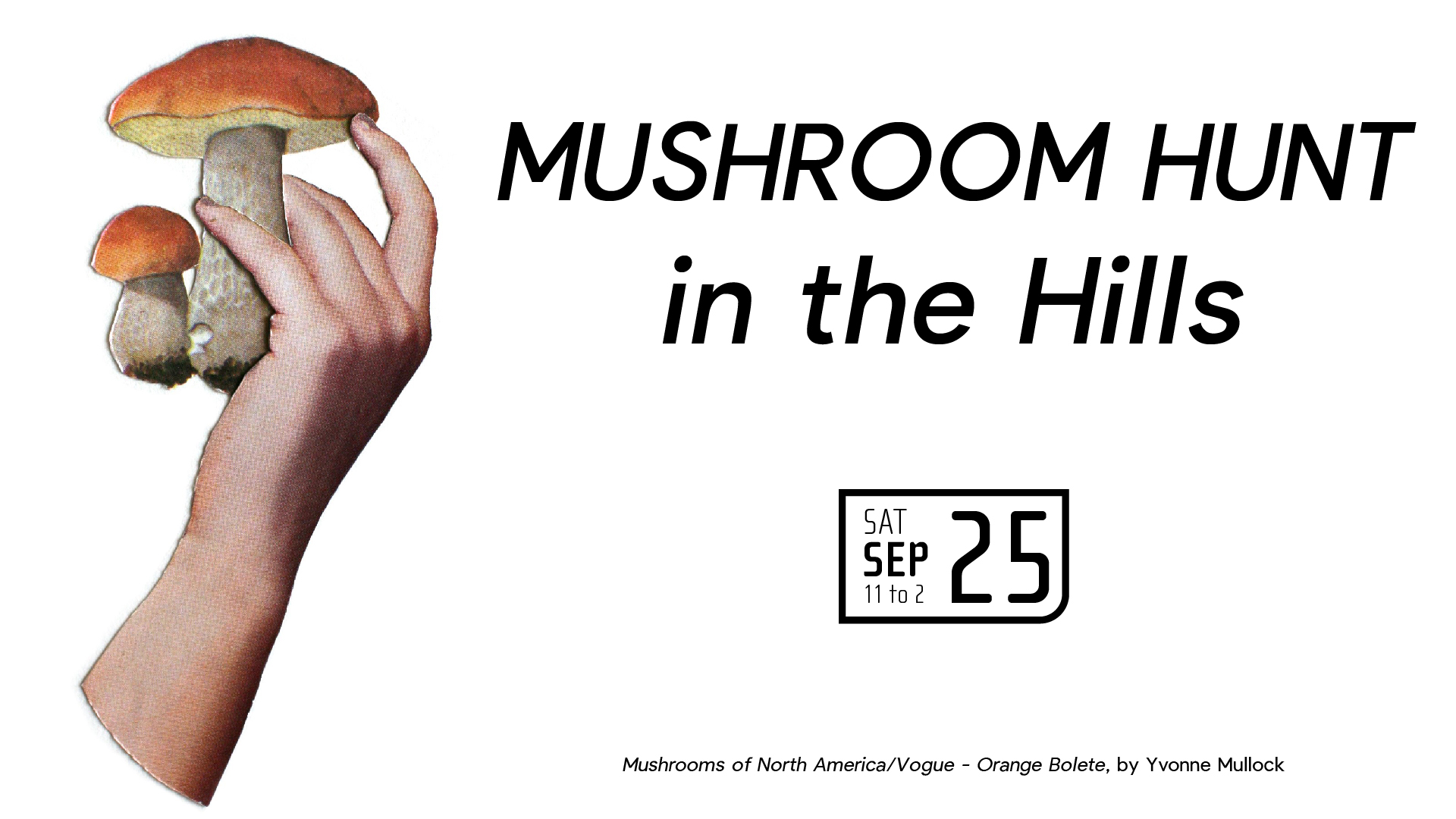 Mushroom Hunt in the Hills