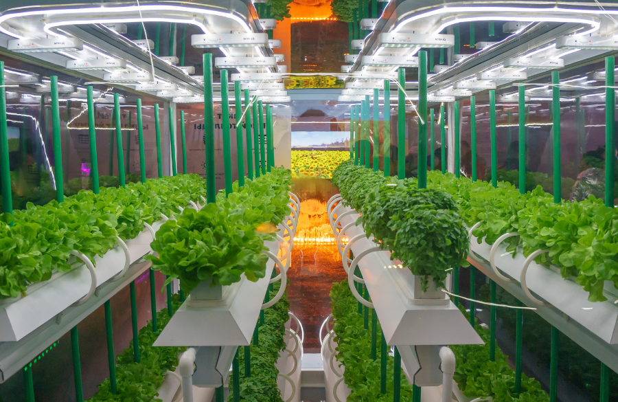 AeroFarms Hoping To Help With The U.S.'s Beer Production