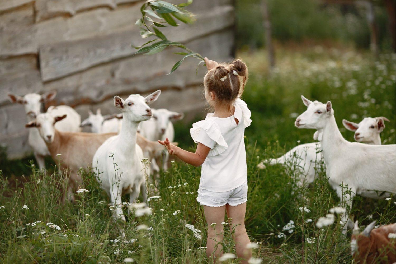 Bilde av barn med lam