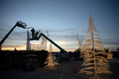 Evening tree lights