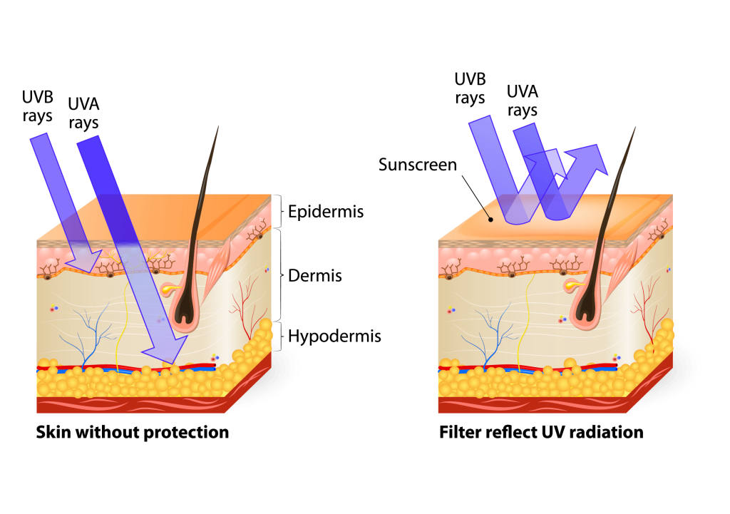 UV Penetration Into the Layers of the Skin