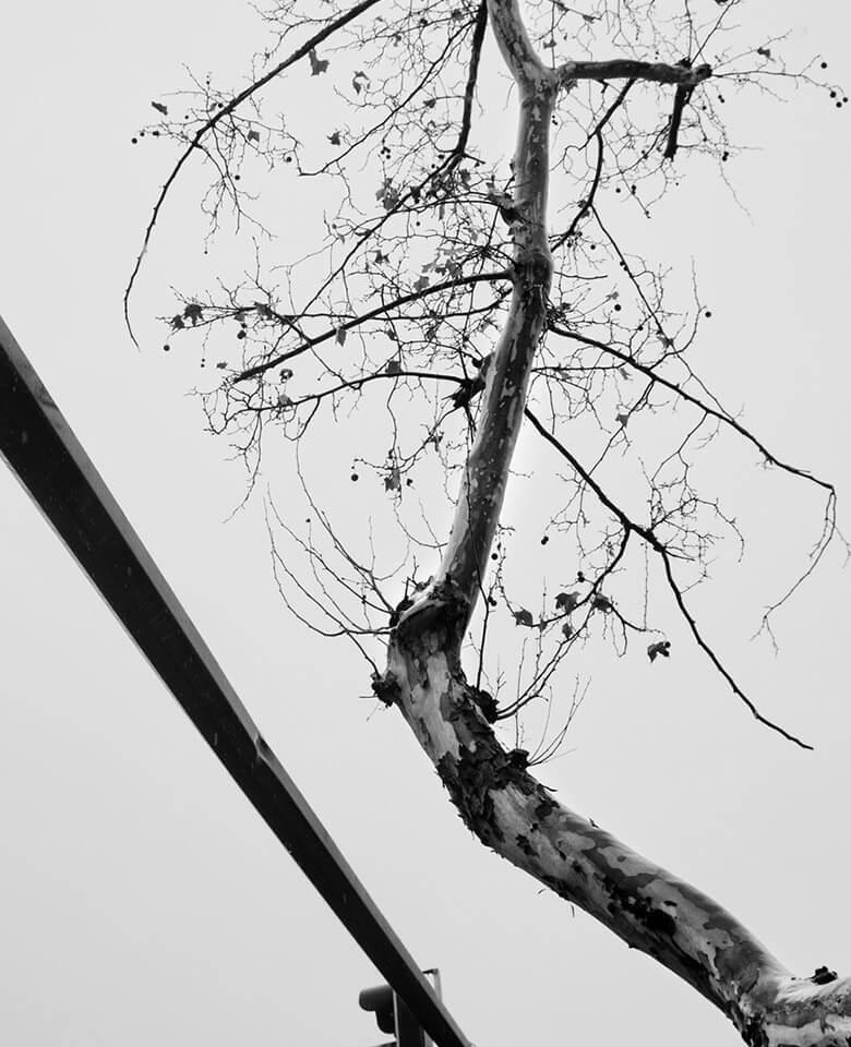 Äste eines Baums