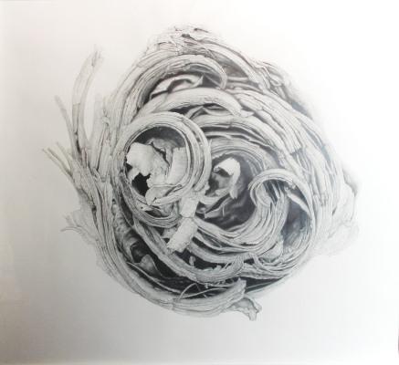 "Patrons' Award for Drawing, Pastel or Printmaking: Csilla Sadlock of Yardley, PA "" Curled Bark"" Graphite on Paper"