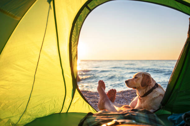 Man camping on the beach with his golden retriever that is sitting outside his tent looking off into the distance