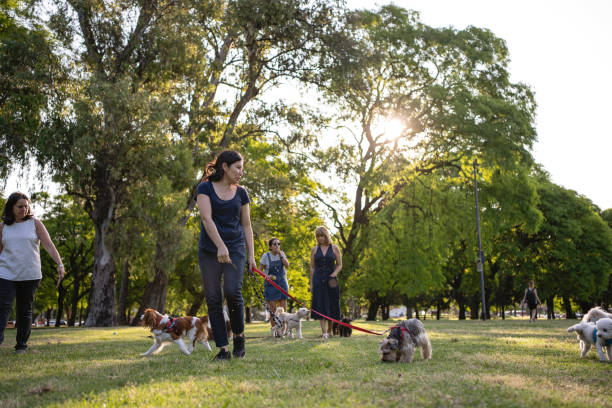 Group of mid-adult women walking their dogs at a public park, late in the evening