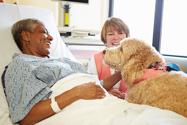 Pet Therapy Dog Visiting Senior Female Patient In Hospital Pet Therapy Dog And Handler Visiting Senior Female Patient In Hospital therapy dog stock pictures, royalty-free photos & images