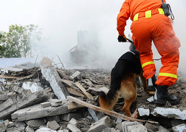 search and rescue Search and rescue forces search through a destroyed building with the help of rescue dogs. search and rescue dog stock pictures, royalty-free photos & images