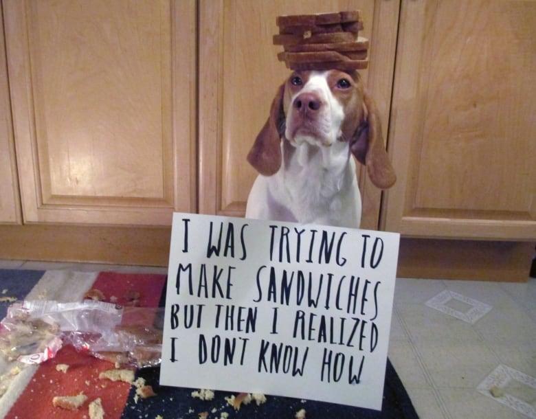 Dogs feel no shame despite the look | CBC News