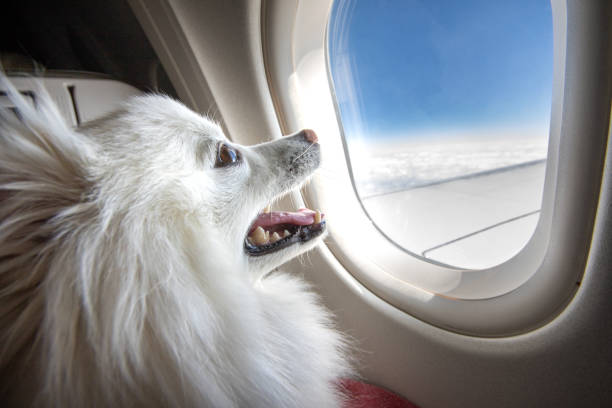 Dog on an airplane A smiling puppy looking out of an airplane window while in flight. dog jet stock pictures, royalty-free photos & images