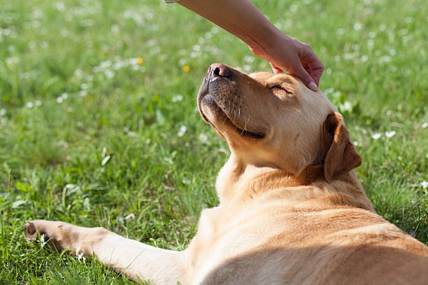 happy dog happy dog dog sun stock pictures, royalty-free photos & images