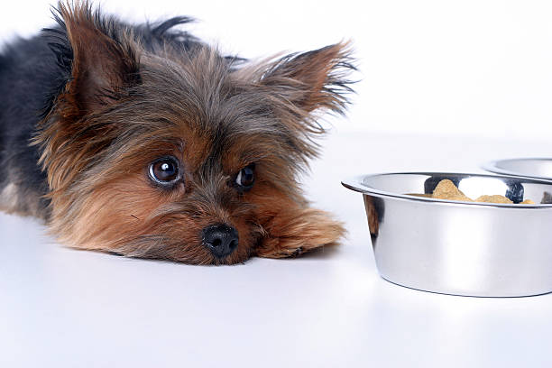 Sick dog  dog sick stock pictures, royalty-free photos & images