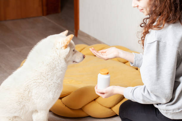 Young woman giving her dog vitamins Pet owner giving his dog a pill. Focus on the plastic bottle with vitamins dog supplement stock pictures, royalty-free photos & images