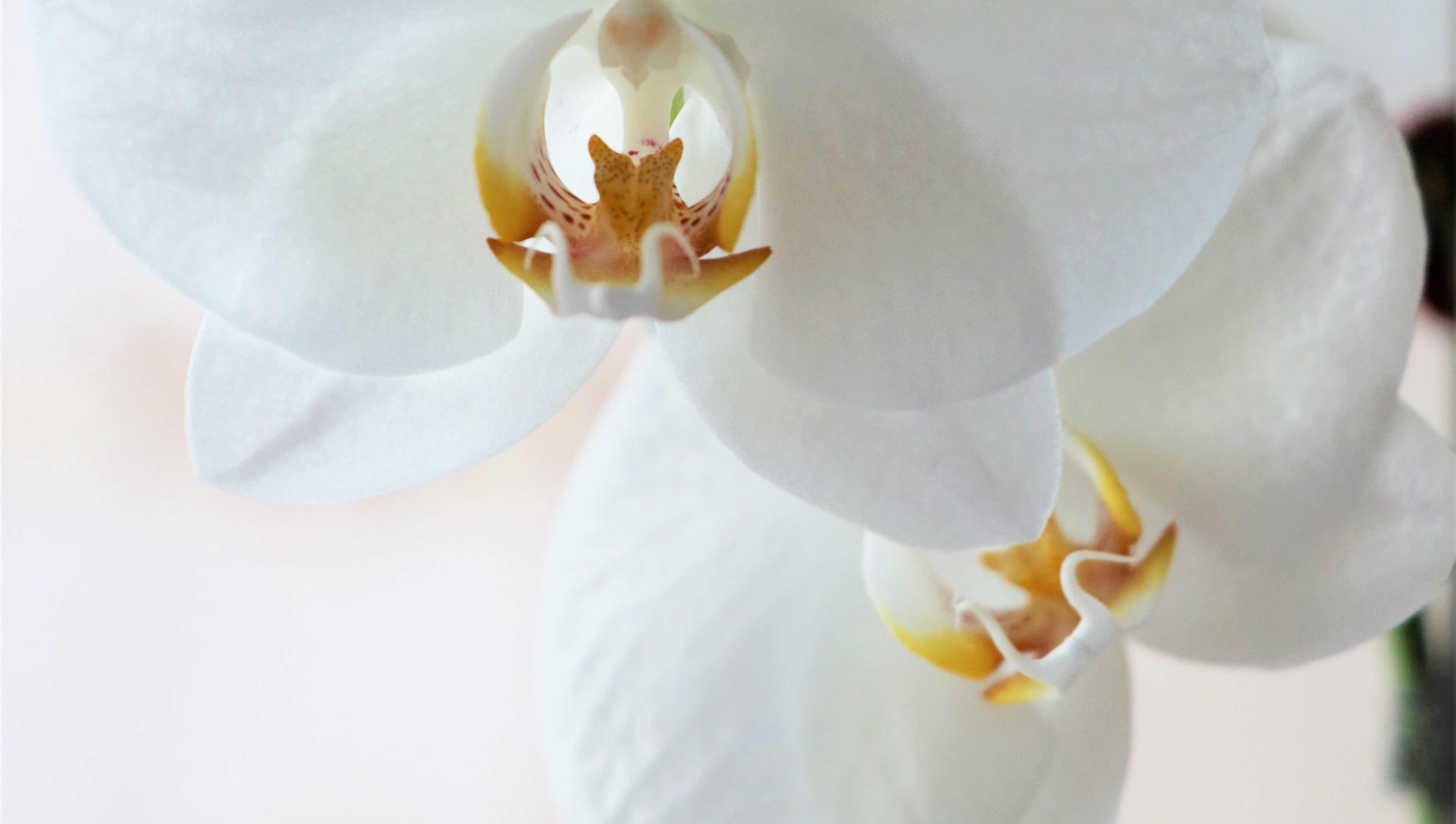 photo of two white flowers