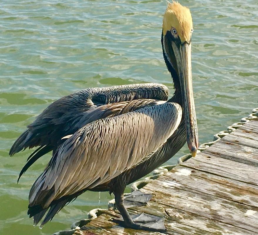 pelican blue rv resort in palacios texas