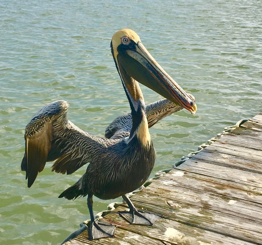 pelican rv resort in palacios texas