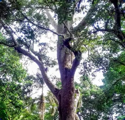 L'iroko, arbre purificateur, symbolise notre vision de la SCPI : une croissance saine et un impact positif pour la planète