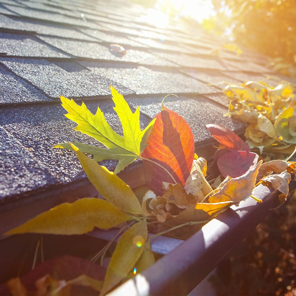 Gutters clogged with leaves