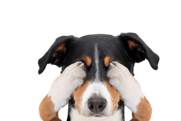 Myth buster! Can comforting my dog reinforce fear?