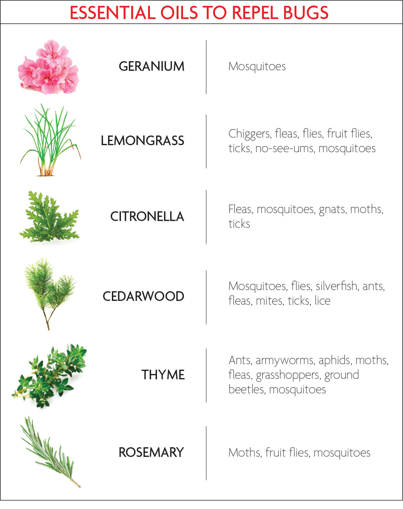 infographic of 6 essential oils and the bugs they repel