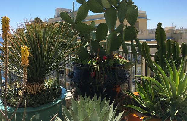 The Cactii Terrace